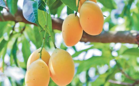 mangos-orange
