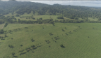 Colombia Farm Investment in Cattle Timber Coconuts